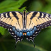 Eastern Tiger Swallowtail - Photo (c) Don Sniegowski, some rights reserved (CC BY-NC-SA)