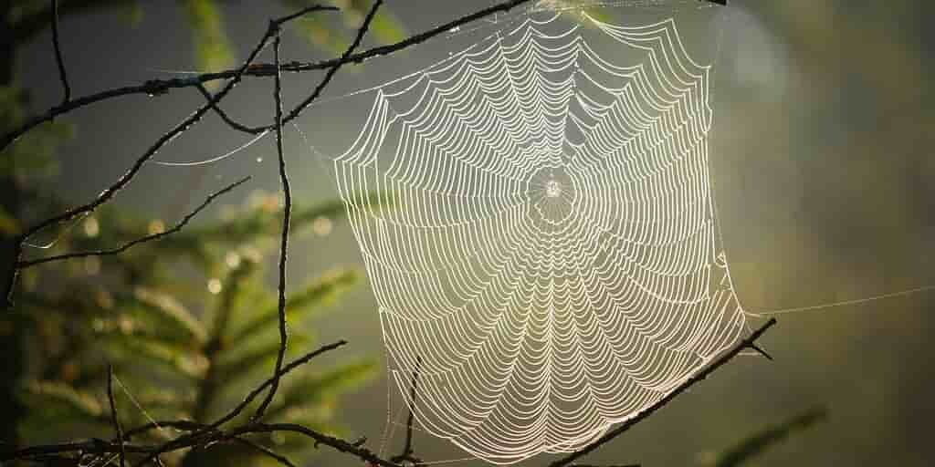 Du plastique fait de soie d'araignées