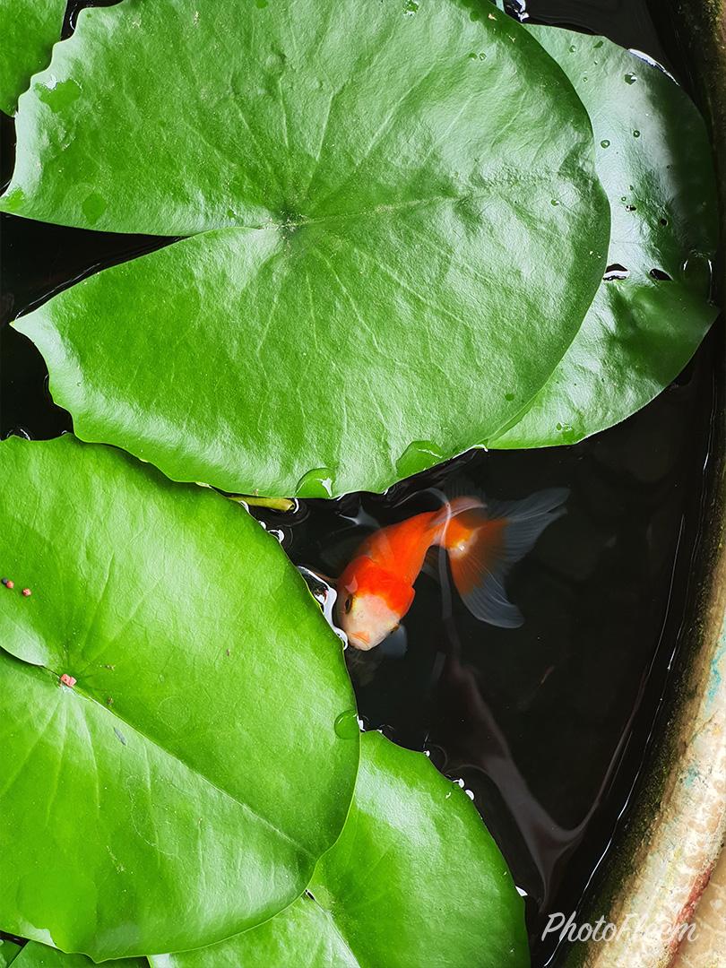 ภาพถ่ายอ่างปลา กล้อง Samsung Galaxy Note 10+