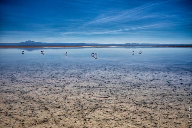 Salt flat lake Flamingos