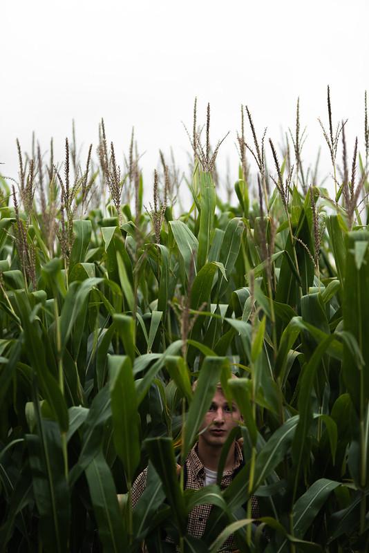 Brennan in the Corn Again
