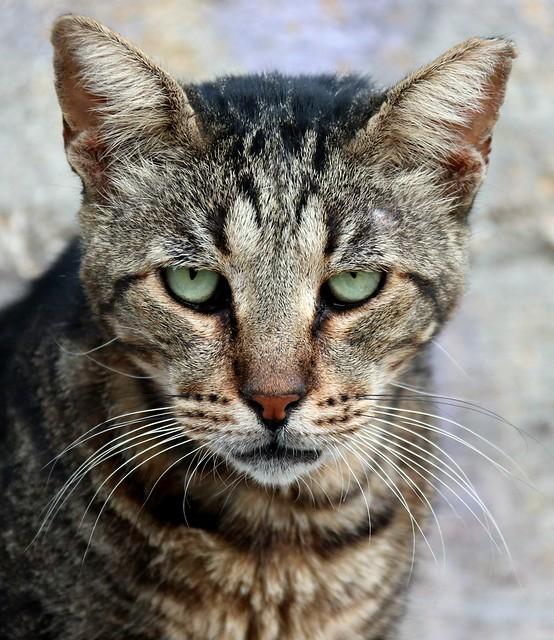 cat XX