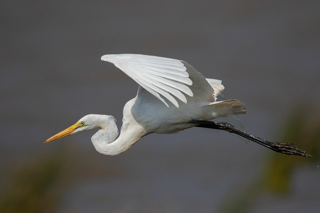 Great bird