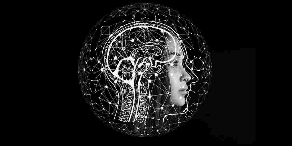 Des cellules souches cérébrales qui survivent sans médicament antirejet