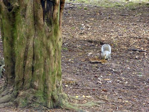 Squirrel Explorer