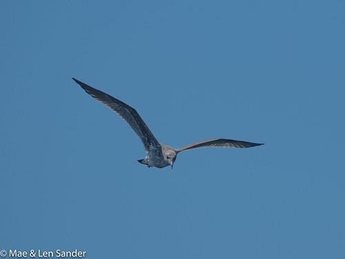 CAbirds-12