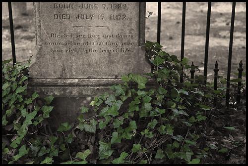 Virginia #3 2009; Churchyard