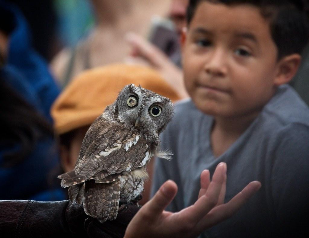 Blind Screech Owl