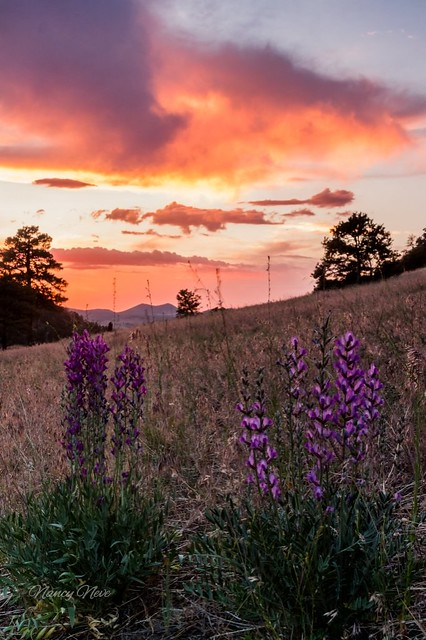Sunset. Northern Arizona