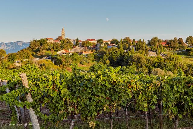 Gračišće i vinogradi pred zalazak
