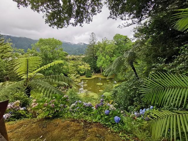Furnas Arboles Jardín Botánico Parque Terra Isla San Miguel Azores Portugal 10