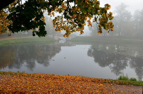 Misty golden autumn. September 27, 2015. It will be repeated soon.