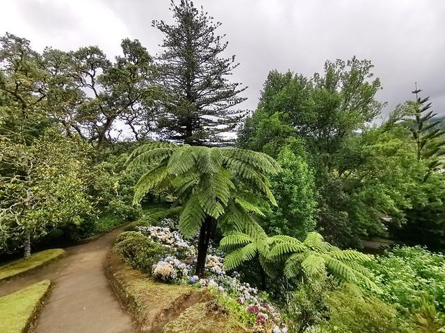 Furnas Arboles Jardín Botánico Parque Terra Isla San Miguel Azores Portugal 11