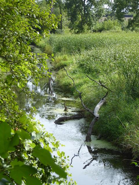 Wheaton, IL, Illinois Prairie Path, Lincoln Marsh, Winfield Creek