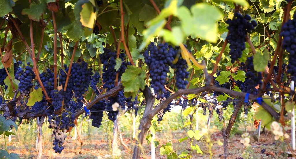 Wijn proeven vanuit Thessaloniki | Wijnproeverij Thessaloniki