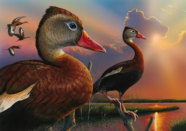 Eddie LeRoy's acrylic painting of a pair of black-bellied whistling-ducks is the winner of the 2019 Federal Duck Stamp Art Contest. Credit USFWS.