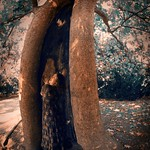 Tree shelter_Patis Paton