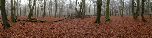 Wed, 12/11/2013 - 15:20 - Speulderbos