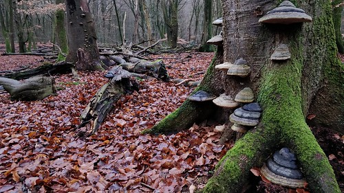 Fri, 01/04/2019 - 14:50 - Speulderbos