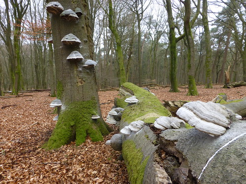 Wed, 04/17/2013 - 08:26 - Speulderbos