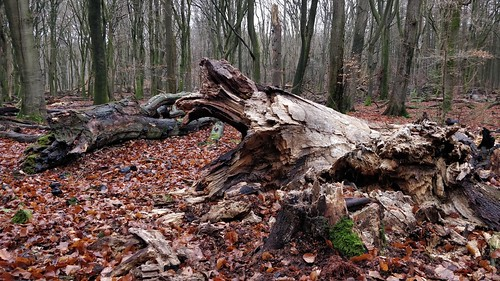 Fri, 01/04/2019 - 13:30 - Speulderbos