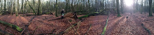 Fri, 01/10/2014 - 13:15 - Speulderbos