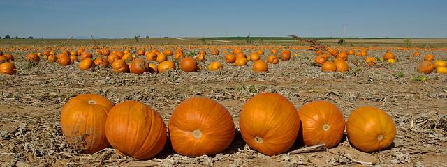 Autumn. Estancia Valley, New Mexico, USA.
