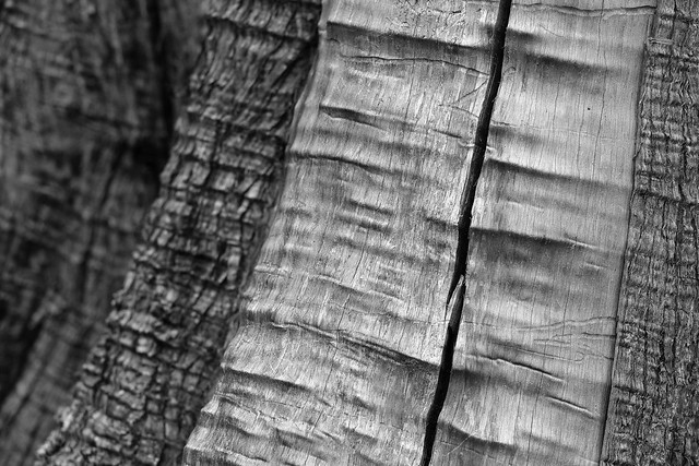 Bose Tree