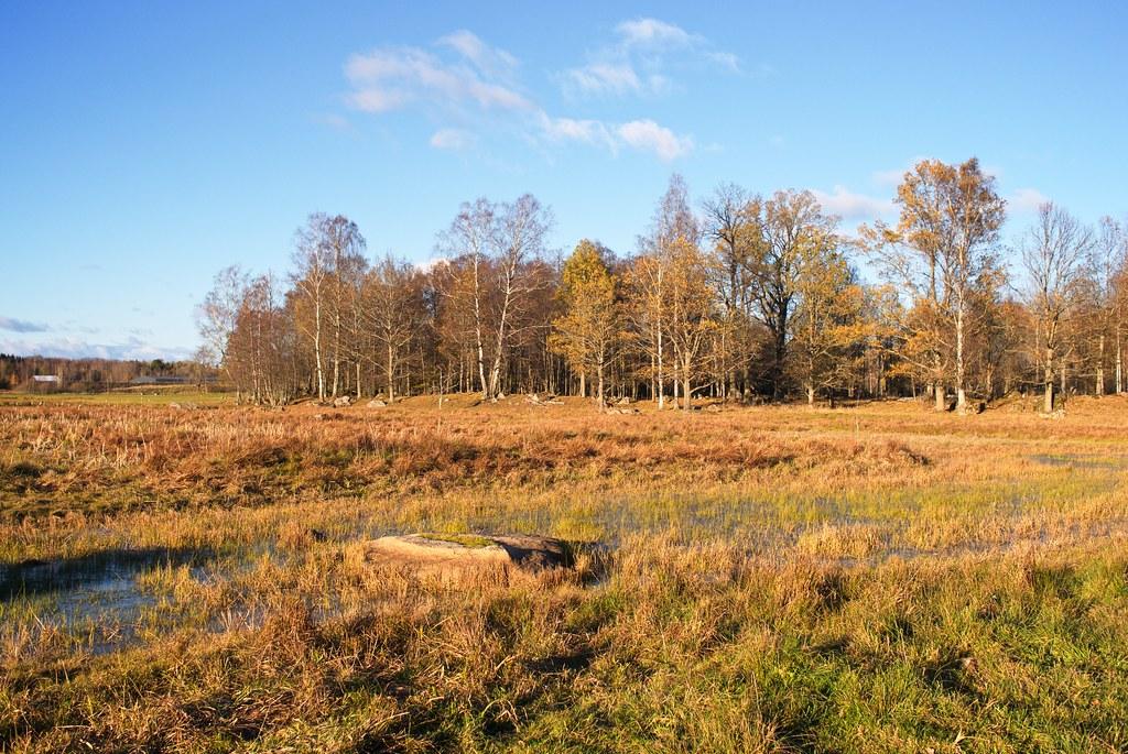 Oset och Rynningevikens naturreservat II