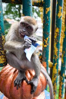 It's a monkey business!