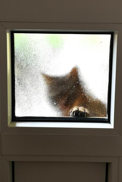 Lass mich doch herein - Let me in