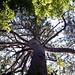 2019-06-29 Congaree National Park