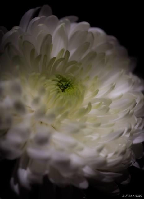 White Cremon
