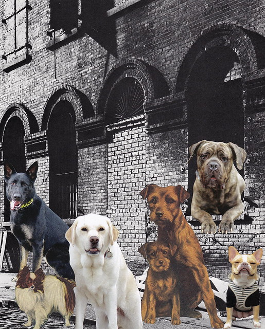 UNSUNG HEROES: Thanks to the countless dogs who have searched & rescued, guided, and loved us!
