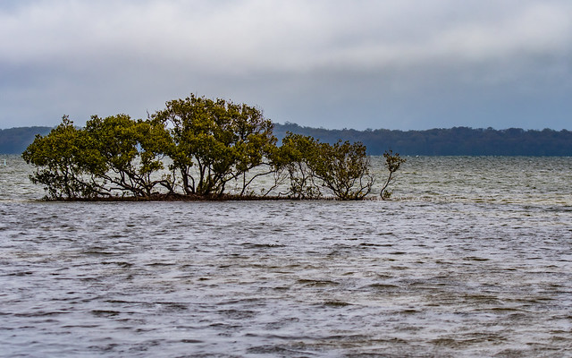Storm coming in over the lake with tree in water