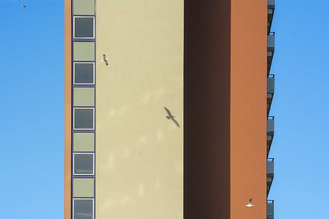 Facade and birds