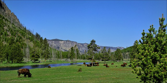 Bison Herd - Panorama - Yellowstone NP, WY [explored]