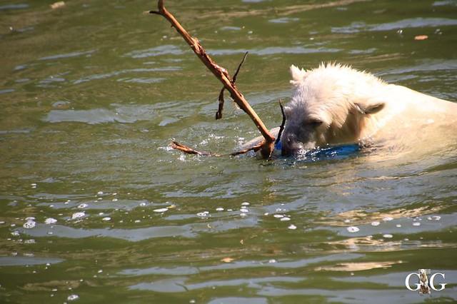 Besuch Tierpark Friedrichsfelde 01.09.201943
