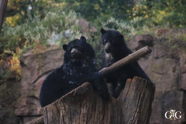 Besuch Tierpark Friedrichsfelde 01.09.20191