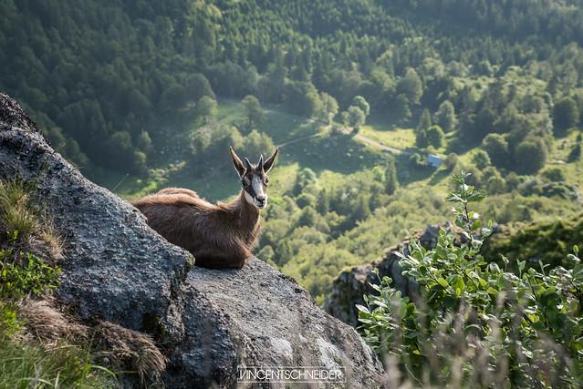 Hohneck dans le Massif des Vosges