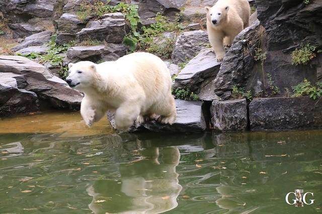 Besuch Tierpark Friedrichsfelde 08.09.201954
