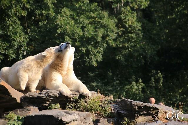 Besuch Tierpark Friedrichsfelde 08.09.201933