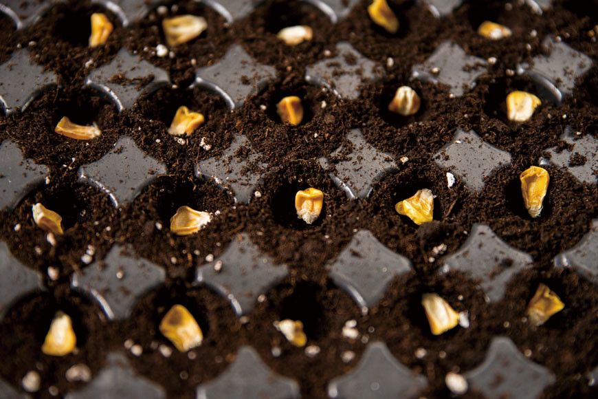 陳柏叡最喜歡將種子悉心放上土壤的育苗工作。