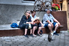 Compañeros de viaje (Eslovenia)