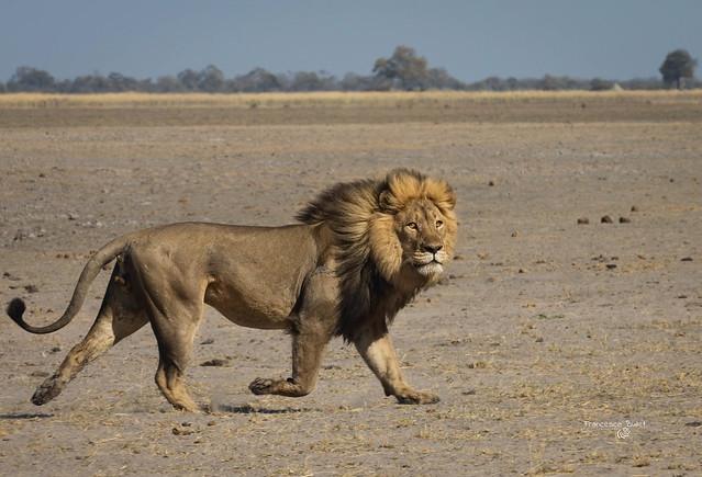 Namibia Buffalo Park