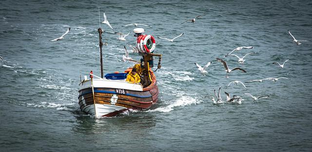 First catch of the day... Flamborough Head Fishermen