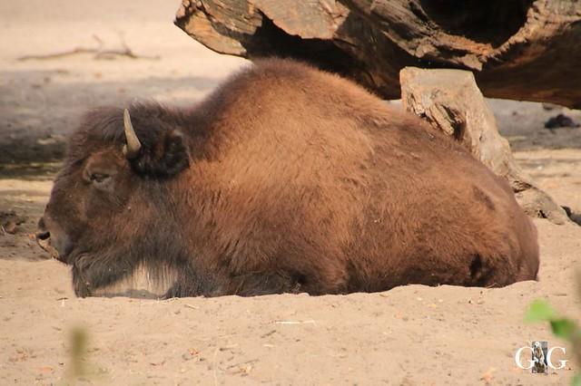 Besuch Tierpark Friedrichsfelde 08.09.2019153