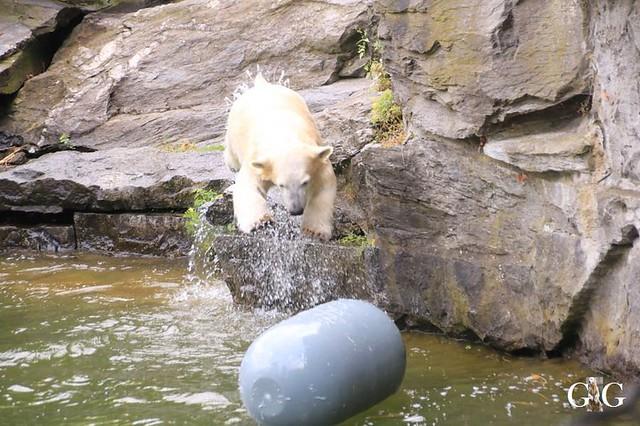 Besuch Tierpark Friedrichsfelde 08.09.201983