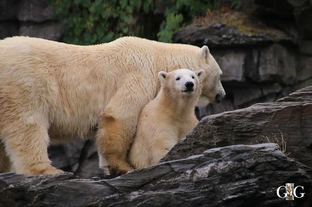 Besuch Tierpark Friedrichsfelde 08.09.2019114