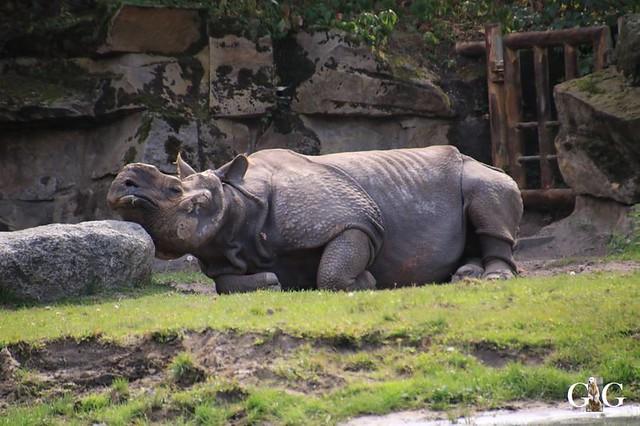Besuch Tierpark Friedrichsfelde 08.09.2019105